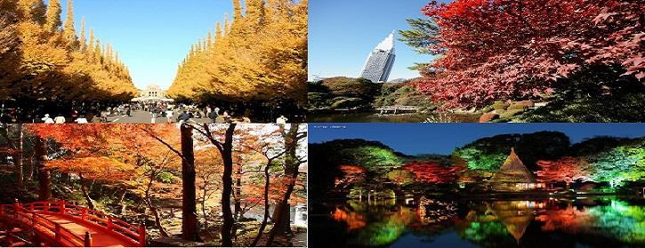 Autumn leaves01
